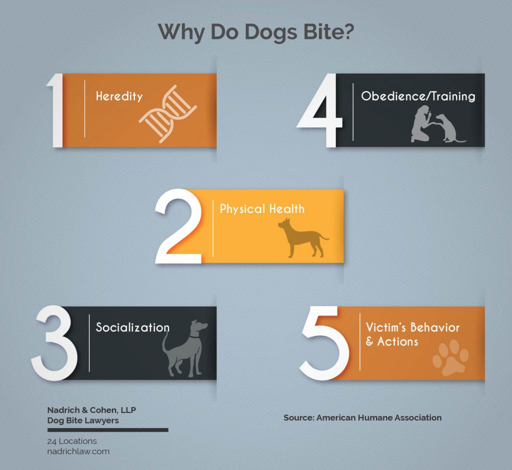 Why Do Dogs Bite